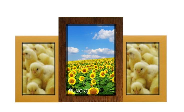 Пьедестал почета Двойное золото на 3 фотографии